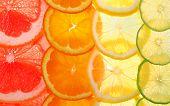 Sliced citrus fruits background (grapefruit orange lemon lime) poster