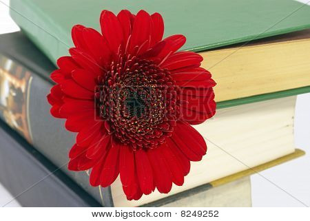 Pile Of Books With A Flower.