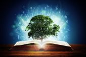 Book or tree of knowledge concept with an oak tree growing from an open book and letters flying from the pages poster