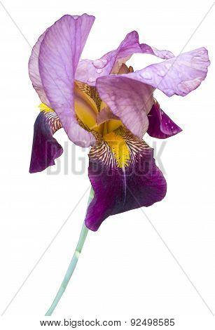 Very Beautiful Purple Flower