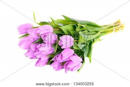 Lilac color bouquet tulips isolated on white background
