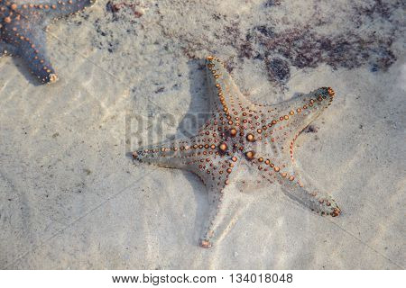 Starfish in a rock pool selective focus