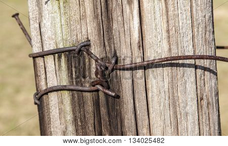 fence of wood with rotten nailed barbwire