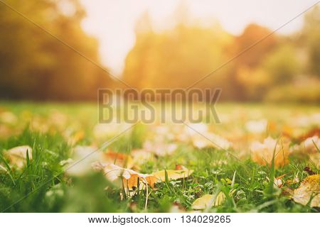 colorful leaves in the grass, fall season, slightly toned photo