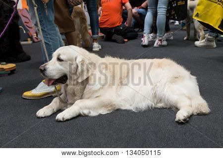 Cute Dog At Quattrozampeinfiera In Milan, Italy