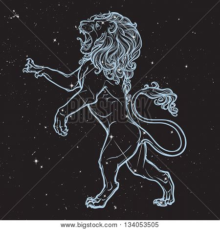 Lion stanging on it's hind legs and roaring. Zodiac figure. Sketch on black nightsky background with stars. EPS10 vector illustration.