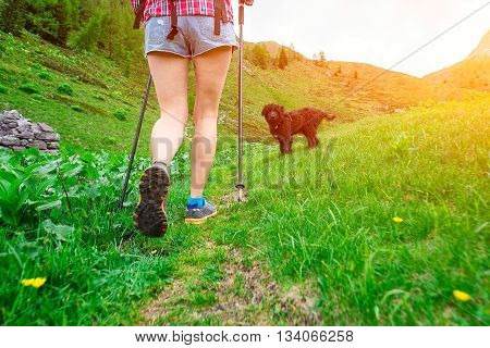 Walk In The Mountains Of Girl With Dog