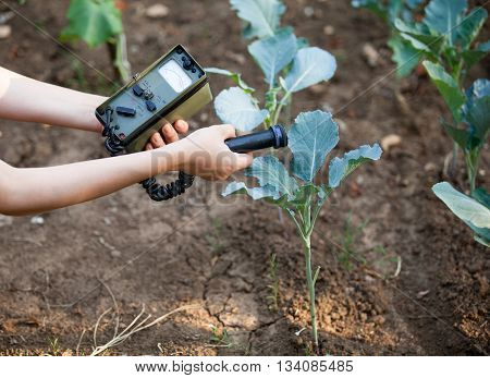 Measuring radiation levels of vegetable in the garden