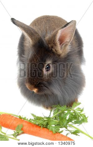 Eating Time For Lion Rabbit