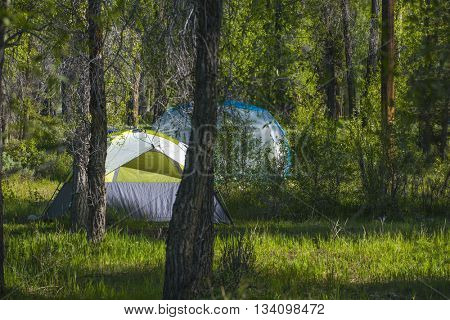 Brilliant green campground camp site with dome camping tent sun light summer