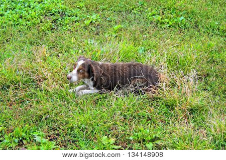 Dog in the grass in the autumn day