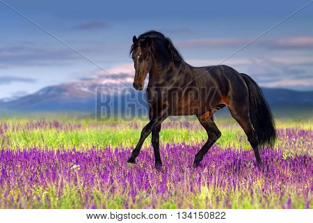 Stallion trotting in flowers against mountain view