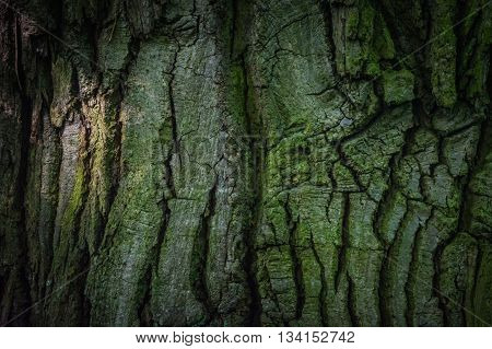 Dark green tree bark in the forest