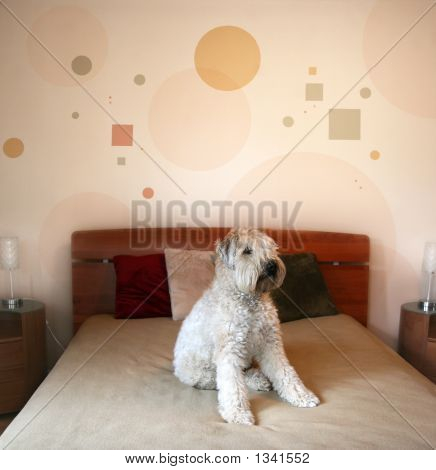 Dog In Modern Bedroom