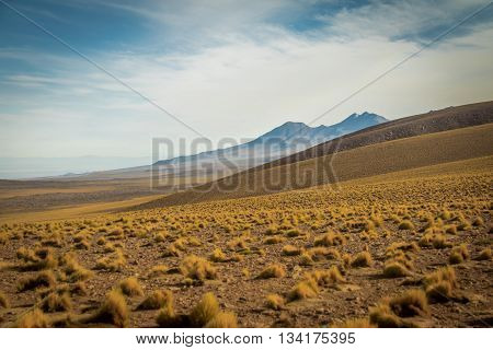 Atacama Desert mountains and vegetation - Chile