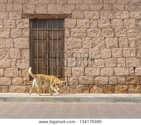 Dog in front of a brick building with an wooden door