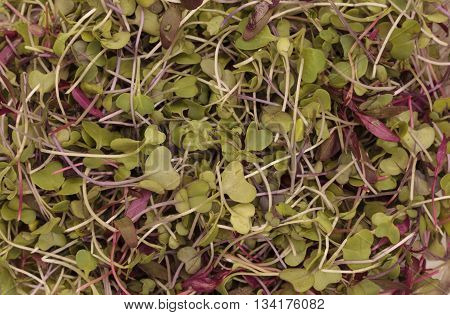 Mixed organic greens, including broccoli sprouts, background
