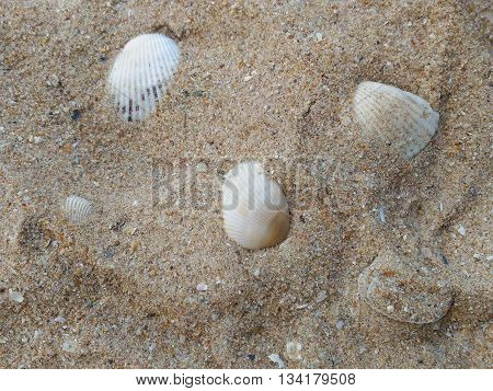 summer background with sea sand and shells