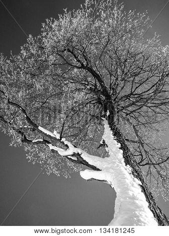 Snow covered tree at ski resort in winter