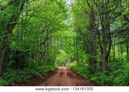 Tranquil forest road in rural Prince Edward Island, Canada.