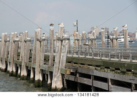 A pier with lots of Sea Gulls