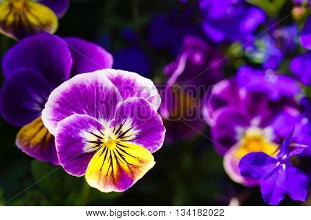 Bright, colorful purple flowers in a garden