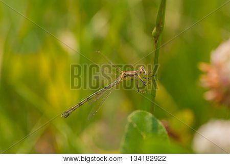 Macro of a damselfly holding onto a flower stem.