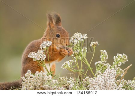 red squirrel standing with flowers and plants