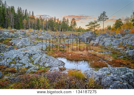 rocks with trees and blue hour in autumn