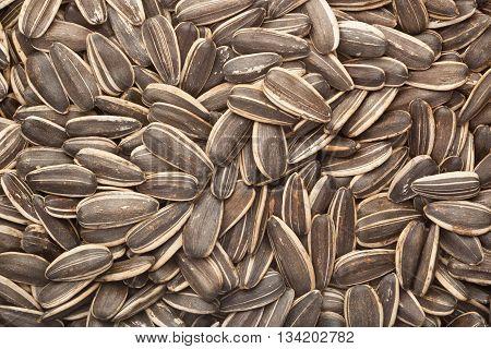 Closeup of a lot of sunflower seeds