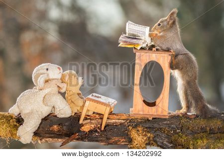 red squirrel is standing at a desk with bear and sheep