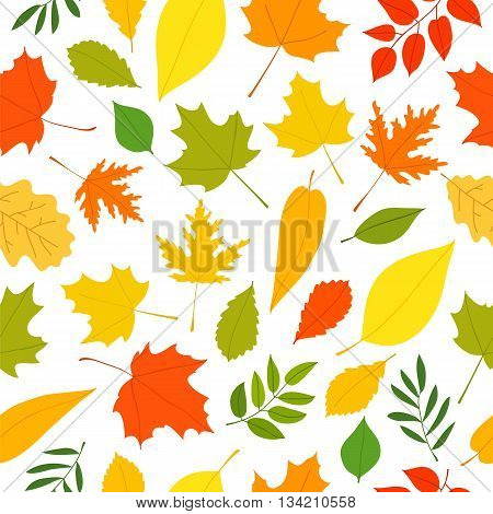 Seamless vector pattern of different autumn leaves on a white background. Elements for autumn design. Golden autumn. Beautiful autumn background.