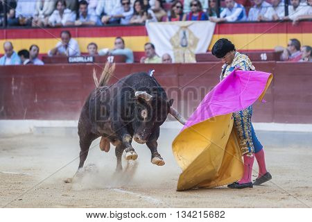 Jaen Spain - October 16 2011: Ivan Fandiño fighting with the cape a brave bull in the bullring of Jaen Spain
