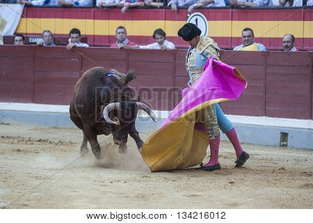Jaen Spain - October 16 2011: David Mora fighting with the cape a brave bull in the bullring of Jaen Spain