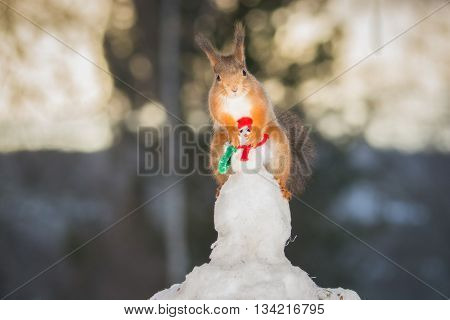 red squirrel standing on a snowman in snow
