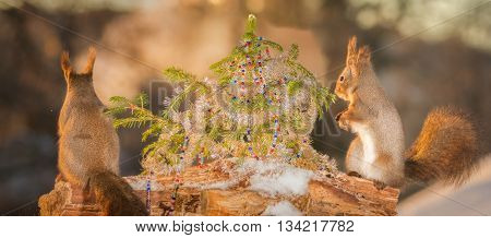 red squirrels with a christmas tree and sun light