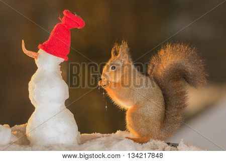 red squirrel with a snowman with red hat