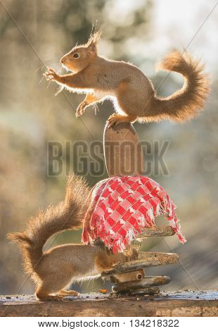 two red squirrels are standing on stone and in a spiral
