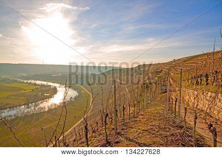On the wine and fruit hiking trail (Wein- & Obstwanderweg Mundeslheim) in the vineyards near Hessigheim / Mundeslheim. View towards the vista