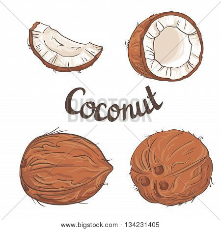 Coconut set - the whole nut,  a coco segment and pulp of a coco. Vector illustration.