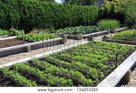 Neatly organized raised vegetable garden.