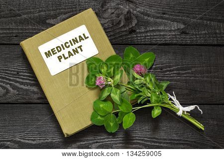 Medicinal plant Red clover (Trifolium pratense) and herbalist handbook. Used in herbal medicine cooking to animal feed honey plant