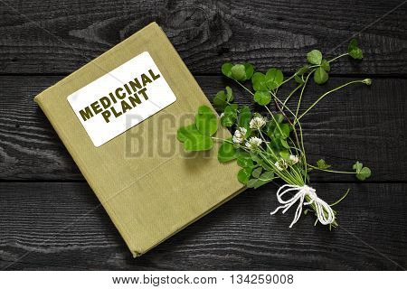 Medicinal plant Trifolium repens or the white clover (also known as Dutch clover and Ladino clover) and herbalist handbook. Used in herbal medicine to animal feed lawn decoration honey plant