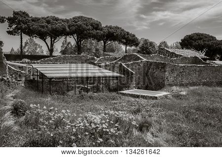 View of the ruins of Ancient Roman city Pompeii, Italy. The ruins overgrown with grass and flowers. Black and white. Pompeii was destroyed and buried with ash after Vesuvius eruption in 79 AD.