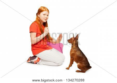 Red beautiful girl taming and training her pet dog pinscher isolated on white poster