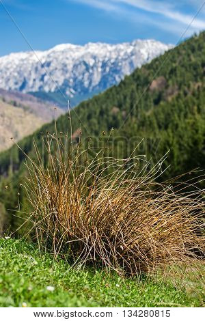Piatra Craiului Mountains are a mountain range in the Southern Carpathians in Romania