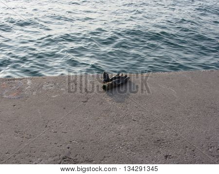 Weathered work glove forgotten on the harbor pier