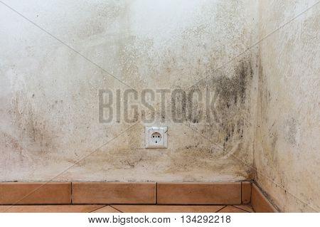 mold on wall - moldy wall -
