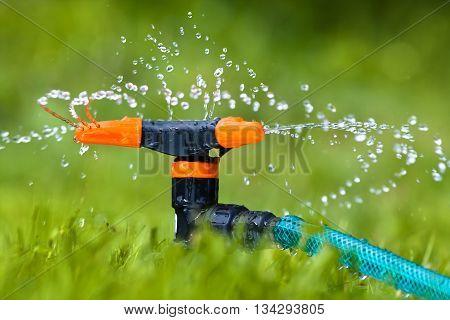 garden sprinkler for watering the lawn or garden