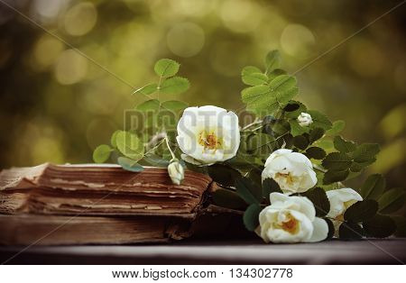 Dogrose lies on the open old books on a table